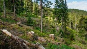 Лес рубится, деньги крутятся: из-за чего Украина спорит с Брюсселем