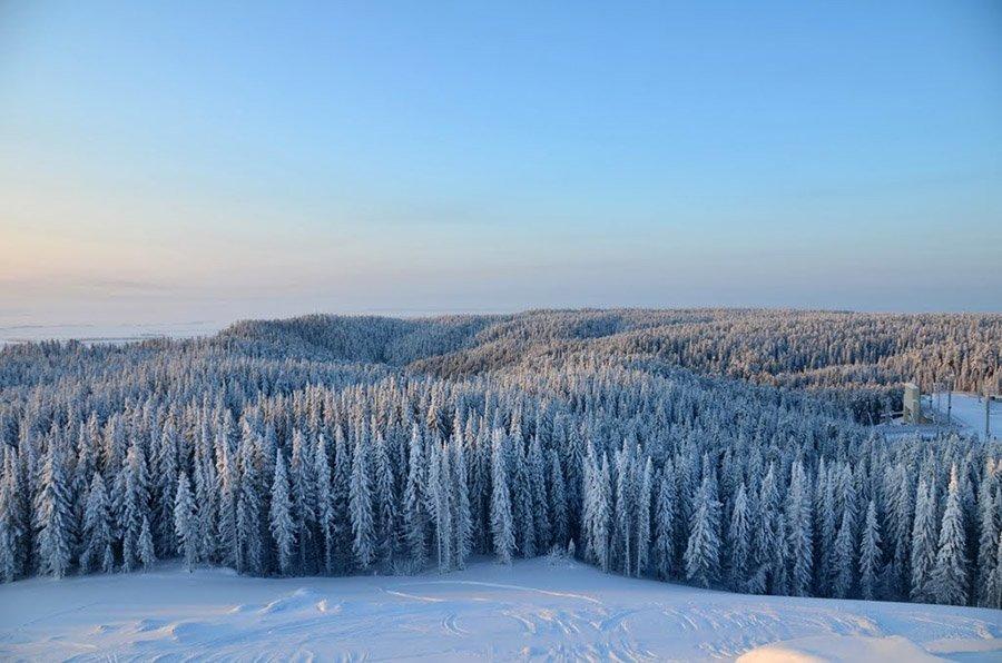 В Рослесхозе оценили запас древесины в России