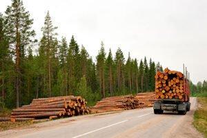 Заготовка древесины в Финляндии в 1-3 кварталах снизилась на 15%