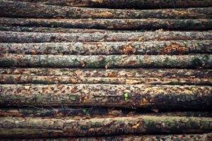 Read more about the article Внешняя торговля круглым лесом Финляндии сократилась в 2020 году