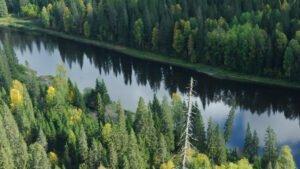 Read more about the article Как спасти русский лес от Китая: Эколог предложил чёткий план