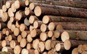 Цены на еловый круглый лес в Китае выросли