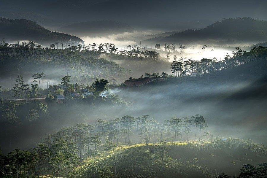Вьетнам стал ведущим потребителем круглого леса и пиломатериалов
