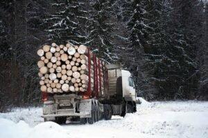 Татьяна Гигель прокомментировала закон о цифровизации лесной отрасли России