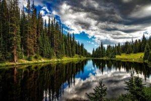 Read more about the article В России хотят разрешить еще один вид использования лесов
