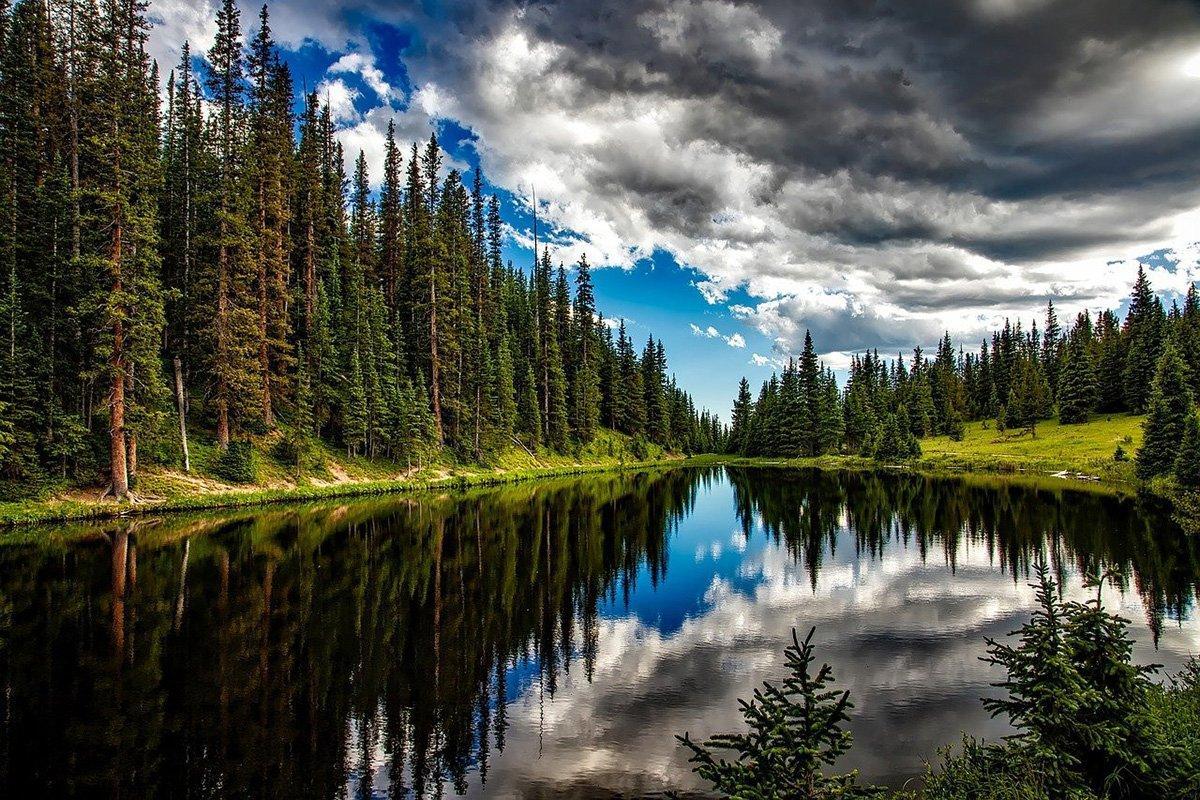 В России хотят разрешить еще один вид использования лесов