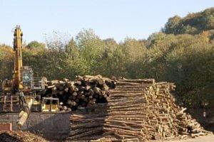 Высокий спрос на топливные дрова сокращает предложение древесины