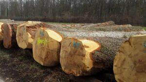 Итоги аукциона ценных сортиментов в Оффенбурге: количество ясеня уменьшилось, дуб подорожал