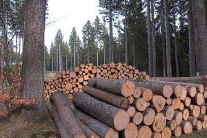 Лесная промышленность в опасении нехватки свежей здоровой древесины