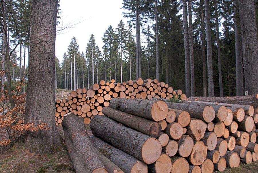 You are currently viewing Лесная промышленность в опасении нехватки свежей здоровой древесины