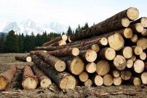 В Хабаровском крае опасаются негативных последствий запрета на экспорт необработанной древесины