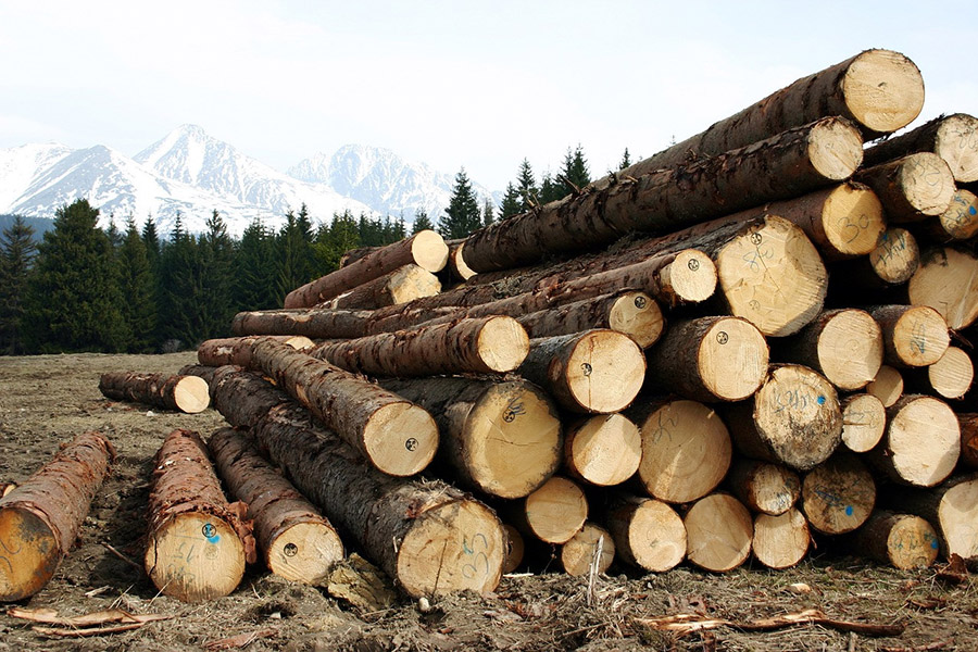 You are currently viewing В Хабаровском крае опасаются негативных последствий запрета на экспорт необработанной древесины