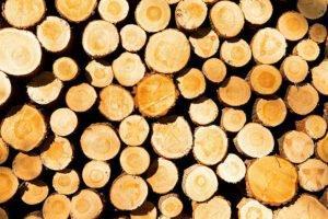 В правительстве утвердили Стратегию развития лесного комплекса до 2030 года