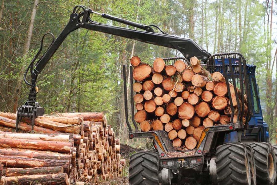 В Австрии медленно возобновляется нормальная работа по рубке леса