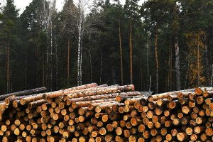 Правительство России фактически запретило экспорт необработанной древесины хвойных пород