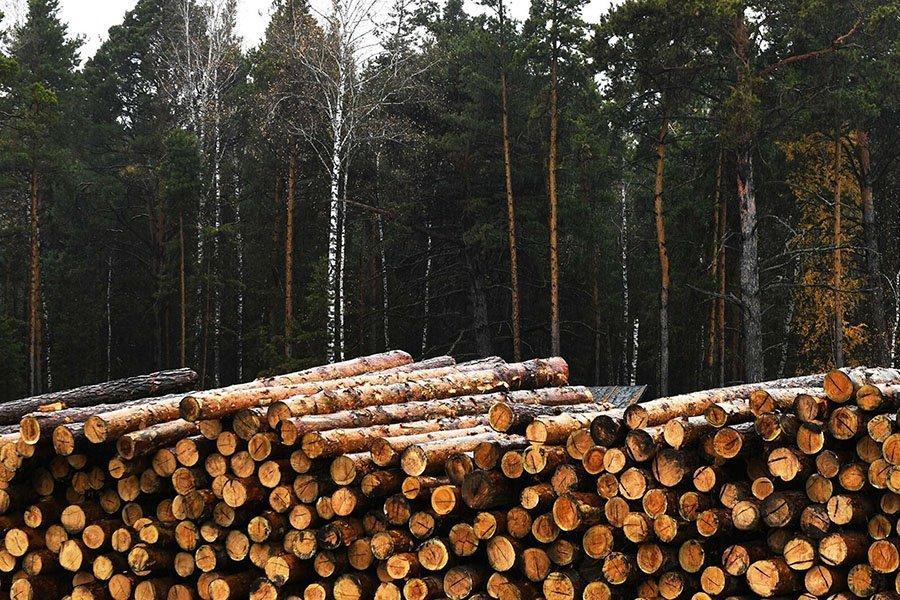 You are currently viewing Правительство России фактически запретило экспорт необработанной древесины хвойных пород