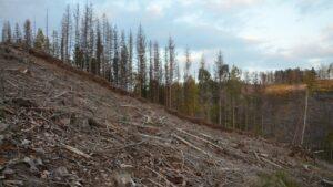 Чехия: Короед съел леса. Тем не менее деревья, которые хочет вся Европа, в них остаются