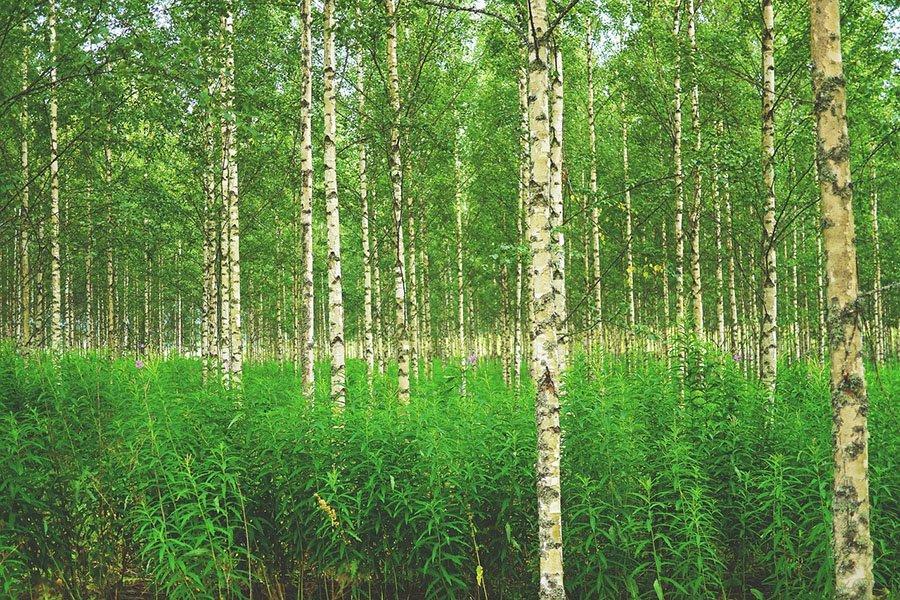 Окупаемость инвестиций в лесное хозяйство Финляндии составила в 2020 году три процента