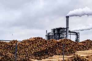 Производители плит повысили цены на деловую древесину