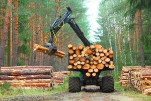 Read more about the article Увеличение продаж лесоматериалов