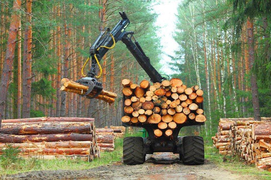 Увеличение продаж лесоматериалов