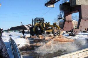 Китай и Финляндия ищут альтернативные российским источники древесного сырья