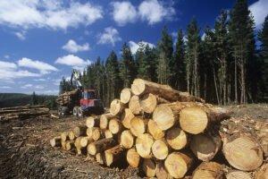 Скандинавия: цены на пиловочник продолжают расти