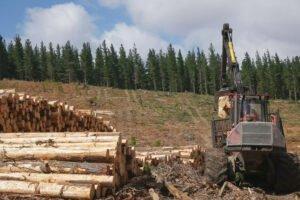 Китай сохраняет запрет импорта круглого леса из Австралии