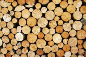 Иркутская область стала лидером в экспорте леса среди сибирских регионов