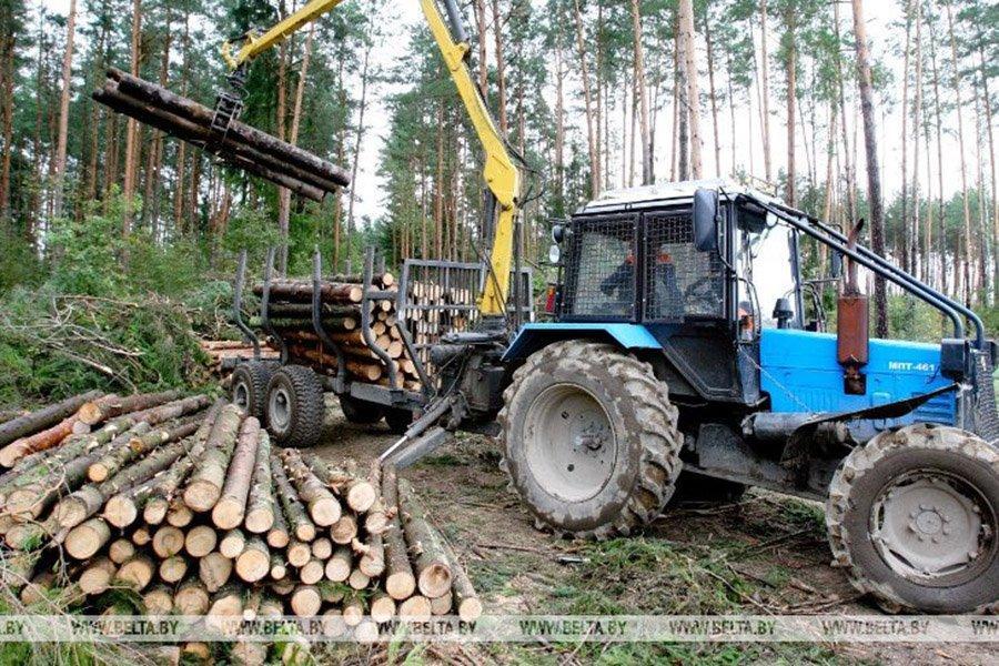 Цены на пиловочник хвойных пород в Беларуси выросли вдвое
