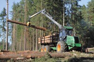 Дефицит древесины в Беларуси ударил по мелкому бизнесу
