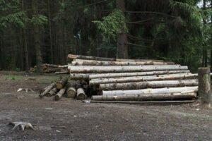 В Беларуси обсуждают новый механизм регулирования экспорта лесоматериалов
