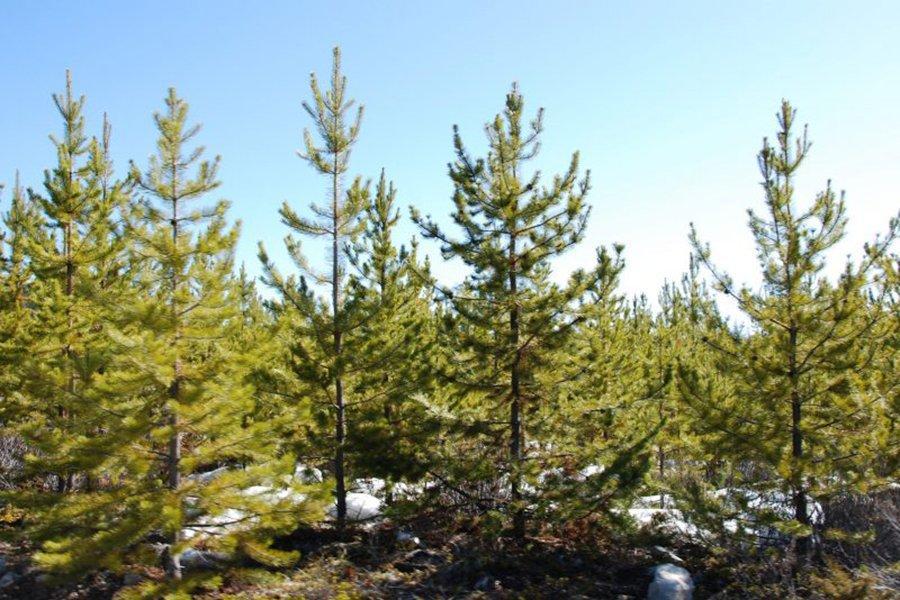 You are currently viewing Обновленная информация о лесной сертификации в Канаде от 2021 года