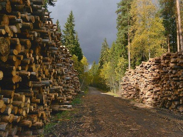 Зачем финны рубят свой лес