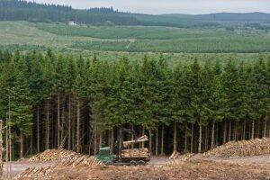 Read more about the article Цены на круглый лес в Великобритании в 2020 году незначительно снизятся