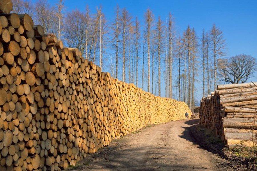 Германия: цены на сосновый пиловочник B/C продолжают расти