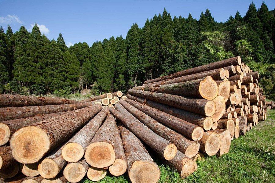 Россия принимает решение о запрете на экспорт круглого леса