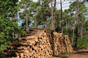 Read more about the article Лесной сектор Франции приветствует план по развитию промышленности
