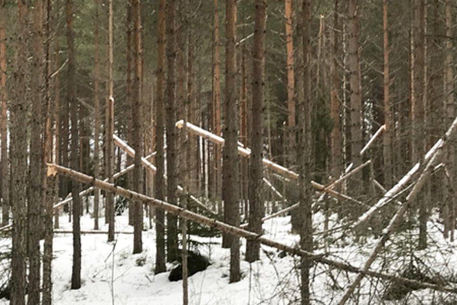 You are currently viewing Около 100 000 м³ поврежденной от снегопадов древесины в Швеции