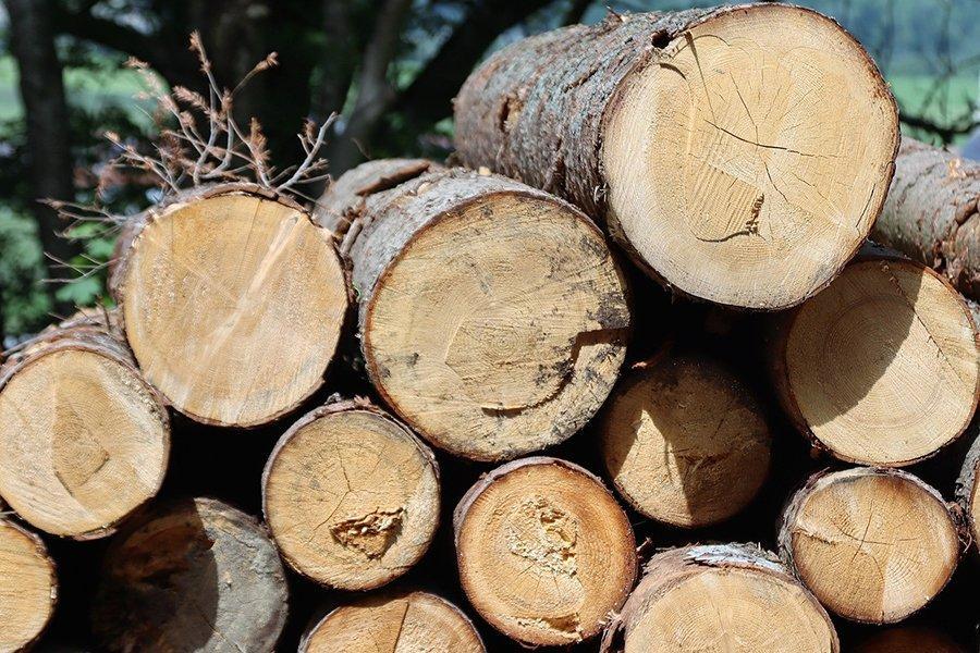 В Китае оставили в силе запрет на ввоз круглого леса из Австралии