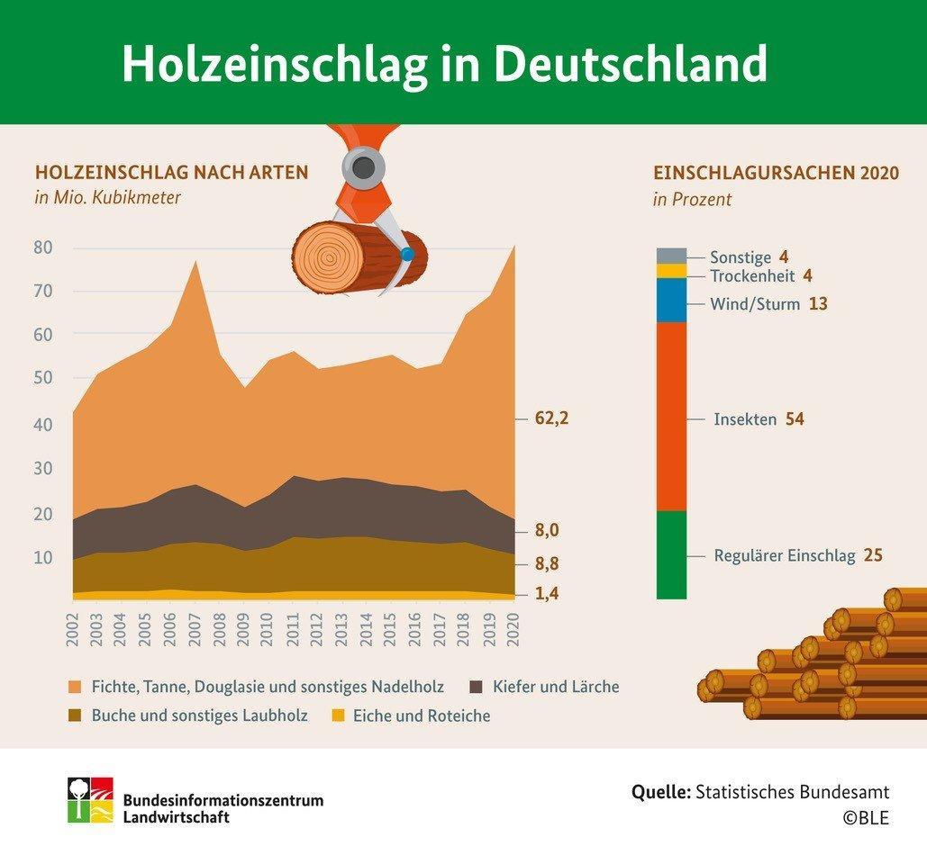 Рекордный объем лесозаготовок в Германии