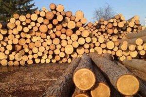Read more about the article Из-за сезонного дефицита цены на необработанную древесину на аукционе выросли до 350%