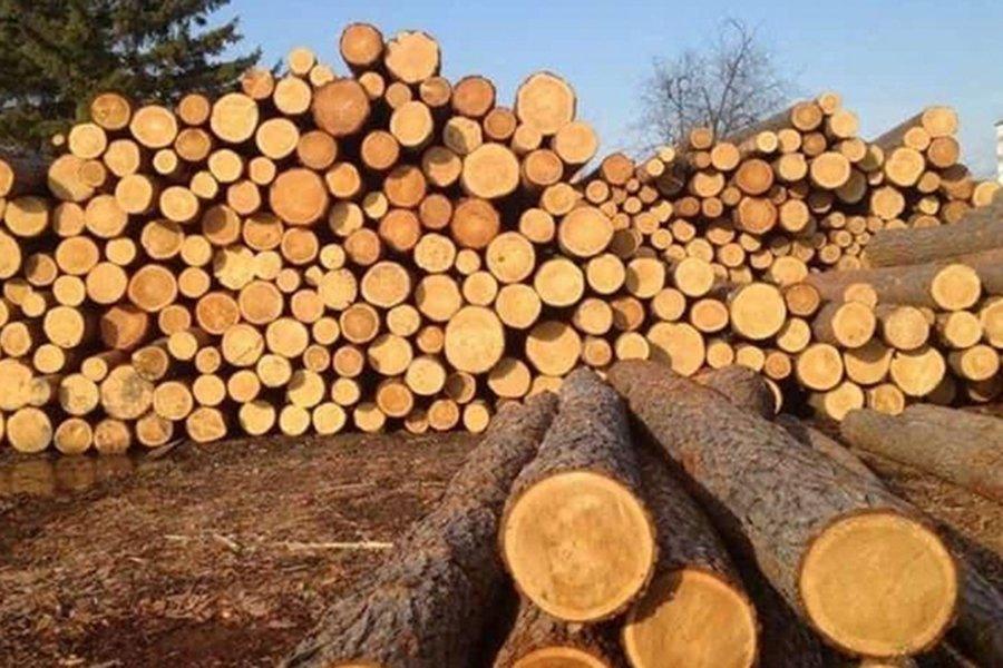 Из-за сезонного дефицита цены на необработанную древесину на аукционе выросли до 350%