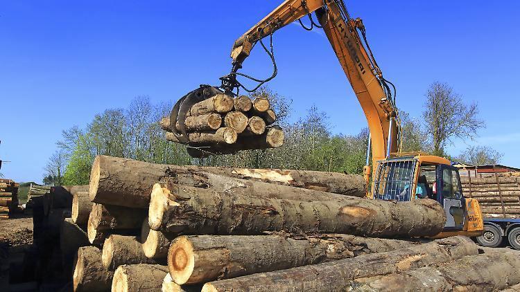 Цены на лес растут, лесовладельцы страдают