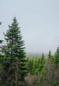 Германия: призыв к прекращению лесозаготовок, — это ошибка