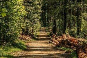 Read more about the article Из-за высокин цен на лесоматериалы лесовладельцы объявили забастовку пил