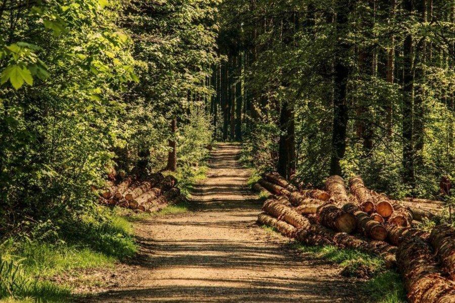 Из-за высокин цен на лесоматериалы лесовладельцы объявили забастовку пил