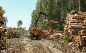 РФ: Власти обсуждают  создание лесной госкорпорации