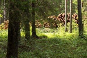 Переработка древесины в Финляндии ниже среднего многолетнего показателя