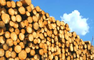 Read more about the article В России возник дефицит древесины для строительства домов